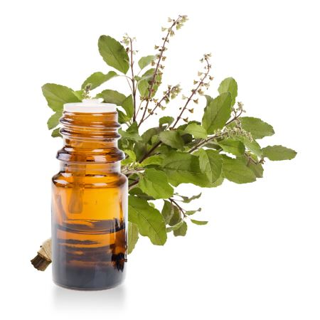 Basilic exotique ou tropical pour le soin des maux digestifs et f minins - Ou planter le basilic ...