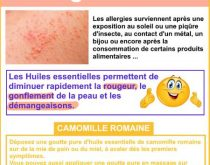 allergie cutanée et camomille romaine