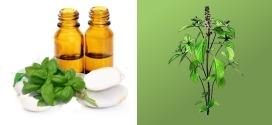 Basilic Exotique ou tropical : Pour le soin des maux digestifs et féminins