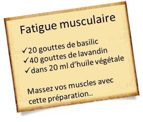 basilic-exotique-fatigue-musculaire