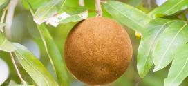 Chaulmoogra: Une huile pour les problèmes de peau, la cellulite et le bronzage!