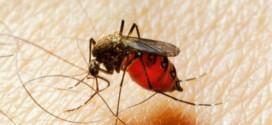 Comment éviter les piqures de moustiques