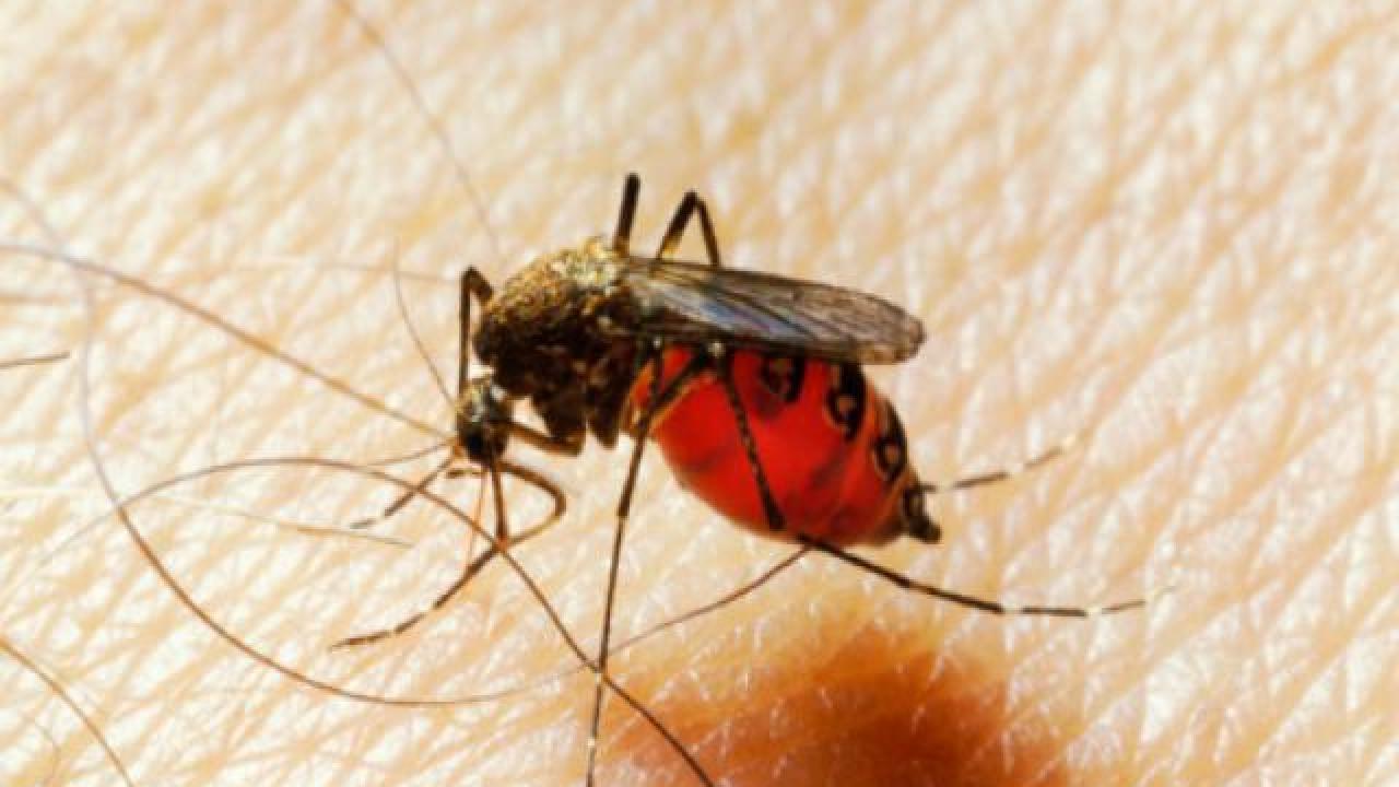 Piq re de moustique comment l 39 viter - Piqure aoutat et huile essentielle ...