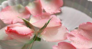 démaquillant eau de rose