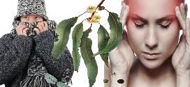 L'huile essentielle Eucalyptus globulus : Affections respiratoires et douleurs