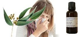eucalyptus radié et maladies hiver