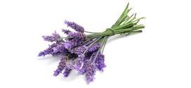 Lavande aspic : Acné, migraine, douleurs… Nos meilleures recettes
