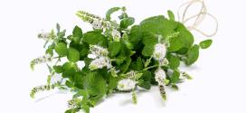 Huile essentielle menthe poivrée : Des recettes pratiques