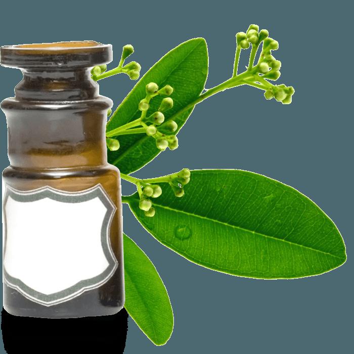 huile essentielle ravensare