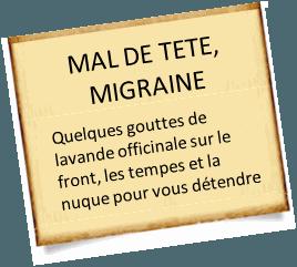 migraine avec la lavande officinale
