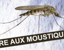 moustique huiles essentielles