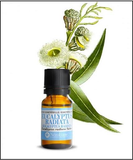 Comment soigner la sinusite avec les huiles essentielles - Sinusite huile essentielle ravintsara ...