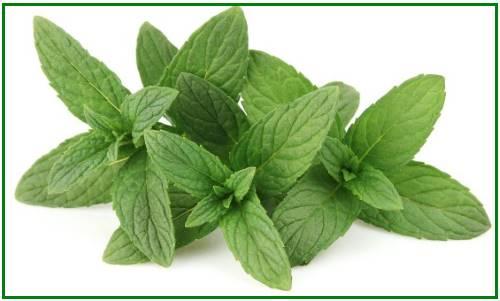huile essentielle de menthe poivrée contre le nez bouché