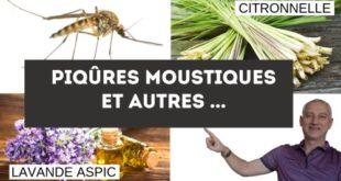 Piqûre insectes et huiles essentielles