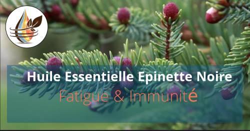 Epinette noire : L'huile pour la fatigue et l'immunité