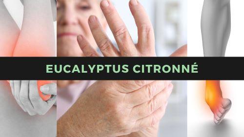 Eucalpyptus citronné contre les douleurs de tendinite