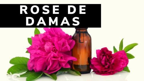 Rose de Damas : Incontournable dans un sérum antiage