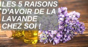 5 bonnes raisons d'avoir de l'huile essentielle de lavande vraie.