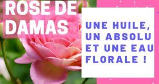 Rose de damas : Une huile, un absolu et une eau florale.