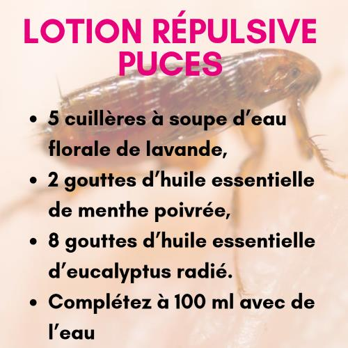 Lotion répulsive puce aux huiles essentielles