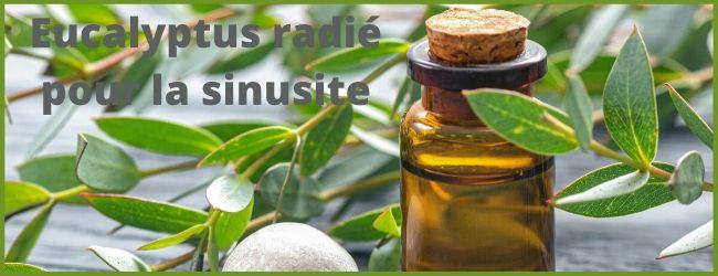 Huile essentielle eucalyptus radié sinusite