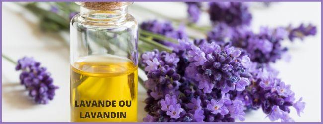 huile essentielle de lavande contre les poux