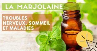 huile essentielle marjolaine à coquilles