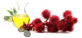 Huile de ricin efficace pour les Cheveux, la Peau et les Ongles / Nos recettes