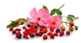 L'Huile de rose musquée : Pour rester jeune ou pour des problèmes de peau.