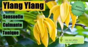 huiles essentielles ylang ylang