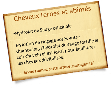 hydrolat sauge officinale