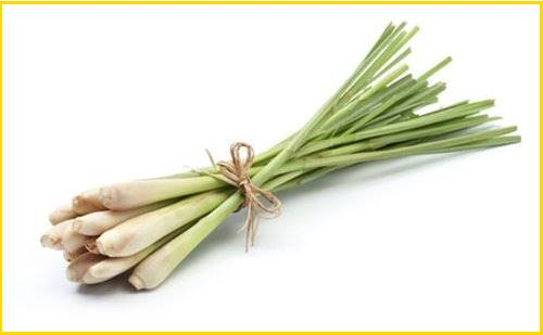 lemongrass verveine citronnelle