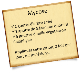 arbre à thé et mycose