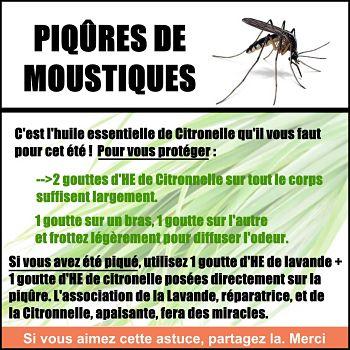 piqure de moustique citronnelle