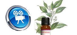 vidéo sur l'huile essentielle de ravintsara